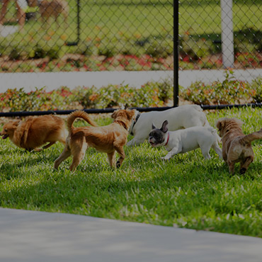 Large Dog Park at Harvest Ridge Apartments